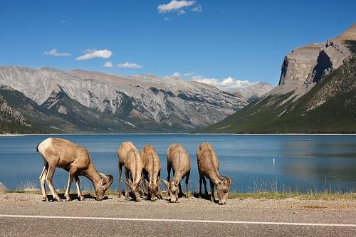 カナダ自然